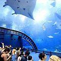 美ら海水族館で家族で行くなら20%割引になるファミリーチケットがおすすめ!