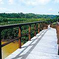 東村ふれあいヒルギ公園にも大きなマングローブ林がある