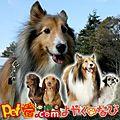 【沖縄】ペットと泊まれる宿はペット宿.comで一括検索