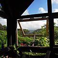 沖縄の森の茶屋どんぐり – 本部町の人気カフェ情報!