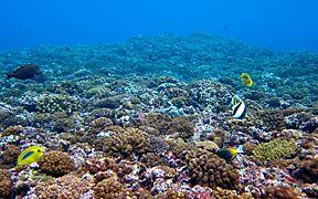 残波のサンゴ